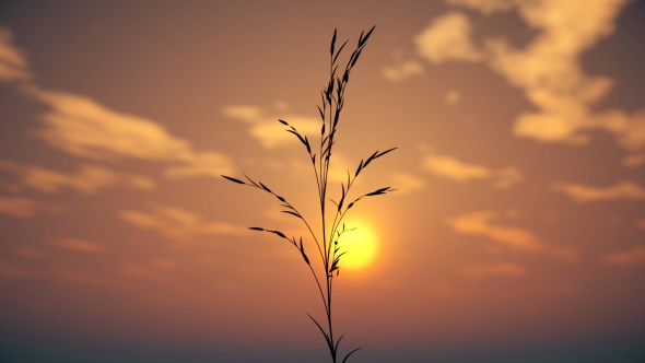 VideoHive Grass at Sunset 21226725