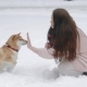 Pretty Woman Playing with Dog and Touching Its Nose in Winter Park - VideoHive Item for Sale