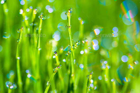 Dew drops background - Stock Photo - Images
