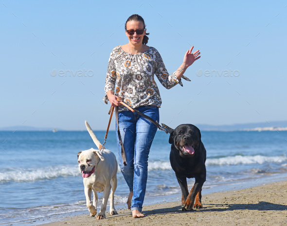 woman and dogs on the beach - Stock Photo - Images