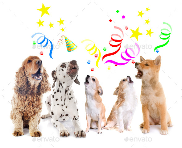 dogs howling for birthday - Stock Photo - Images