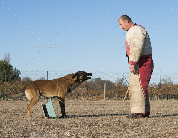 training of a police dog - Stock Photo - Images