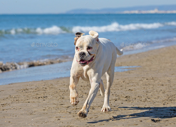 dog on the beach - Stock Photo - Images
