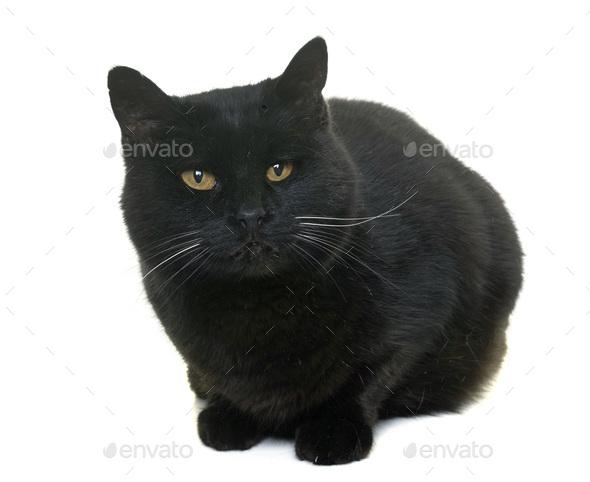 black cat in studio - Stock Photo - Images
