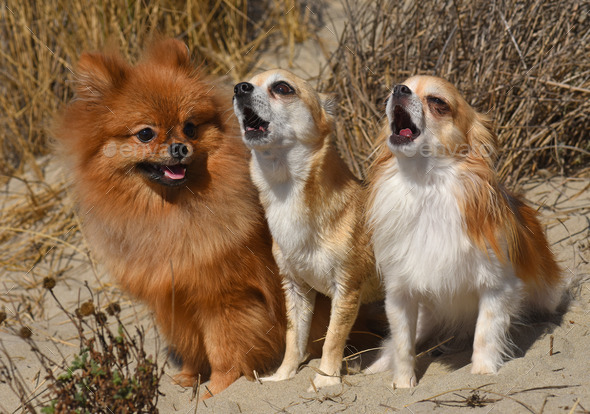 three dogs in nature - Stock Photo - Images