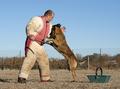 training of police dog - PhotoDune Item for Sale