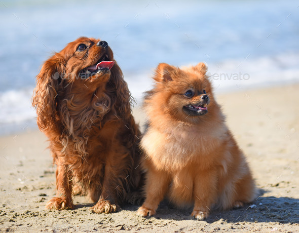 dogs on the beach - Stock Photo - Images