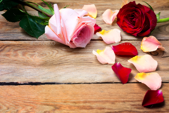Valentine's Day background with pink and red roses, copy space. - Stock Photo - Images