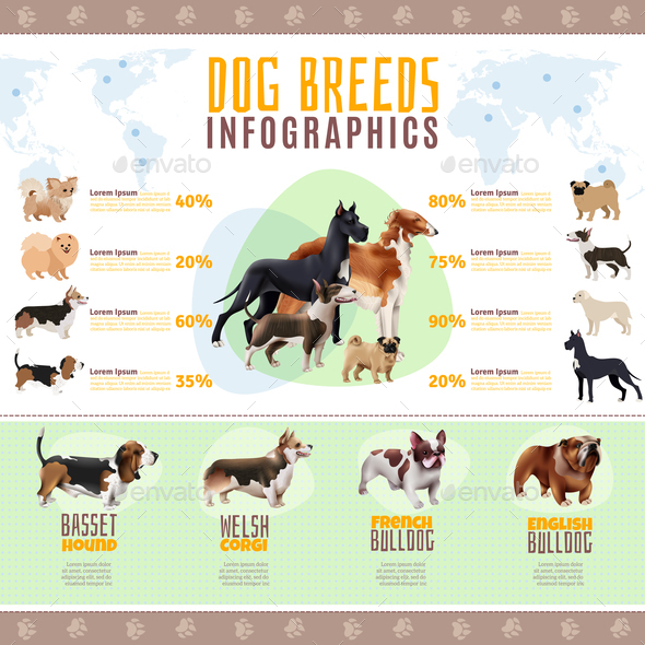 Dog Breeds Infographics - Animals Characters