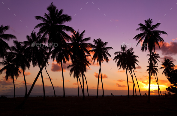 Palm Trees And Colorful Sunset, Antigua - Stock Photo - Images