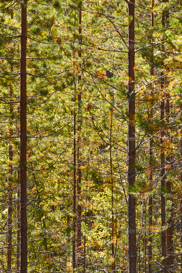 Finland forest detail at Pieni Karhunkierros trail. Autumn season. Vertical - Stock Photo - Images