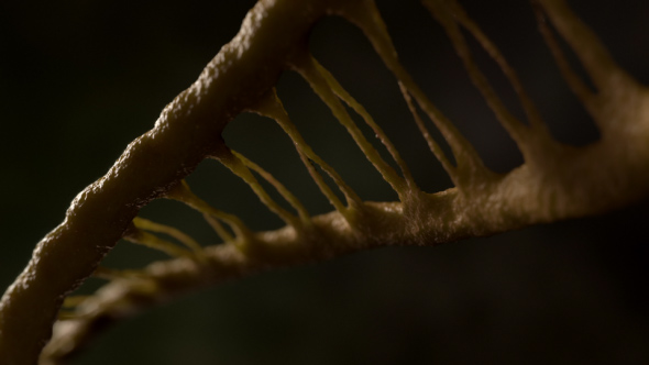 VideoHive DNA 21228887