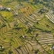 Landscape with Rice Terrace Field Bali, Indonesia - VideoHive Item for Sale