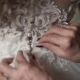 Elderly Woman Buttoning Wedding Dress - VideoHive Item for Sale