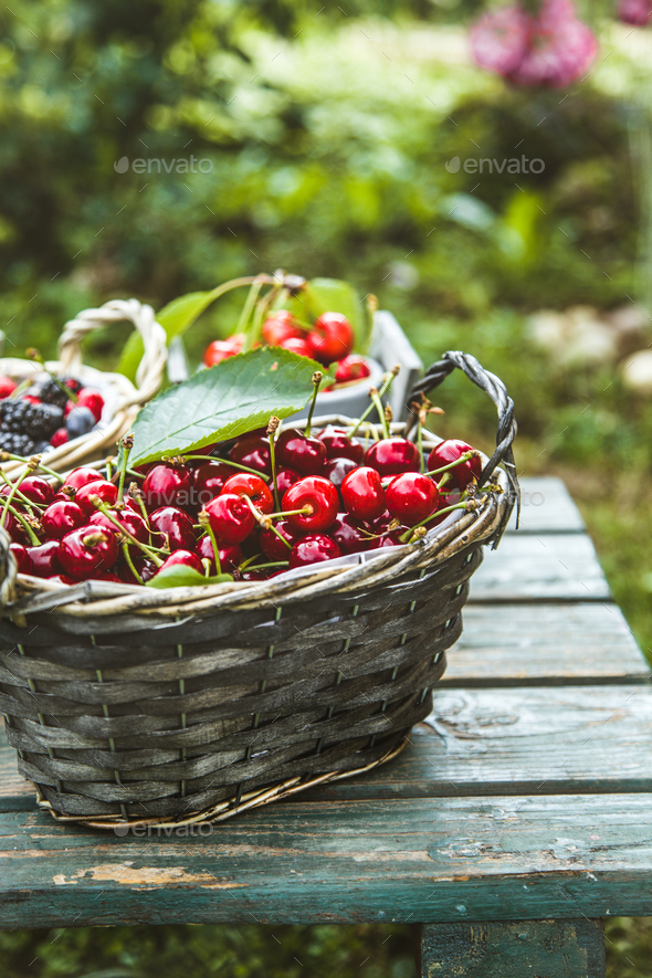 Forest fruit - Stock Photo - Images