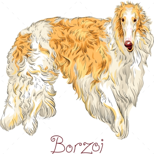 Vector Borzoi Dog Breed - Animals Characters