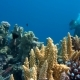 The View of a Diver Exploring a Colorful Reef, Red Sea, Egypt - VideoHive Item for Sale