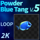Powder Blue Tang 5 - VideoHive Item for Sale