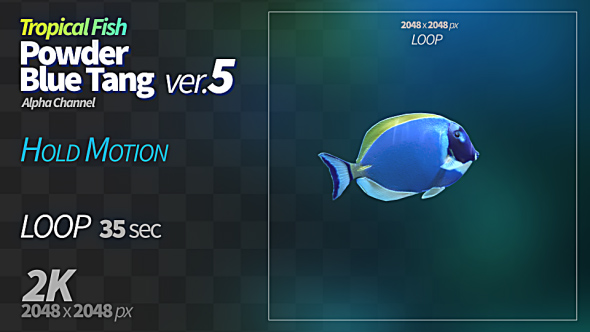 VideoHive Powder Blue Tang 5 21233481