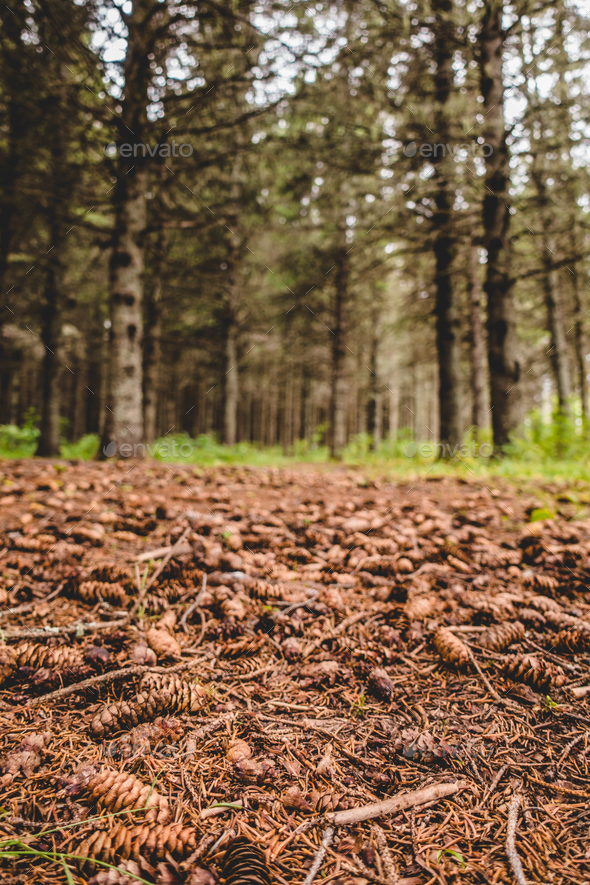 View to waterless ground during Heat Wave in Forest - Stock Photo - Images