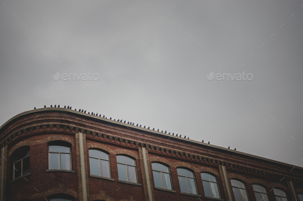 Line of Pigeons Abstract Silhouette Line on Old Brick Building R - Stock Photo - Images