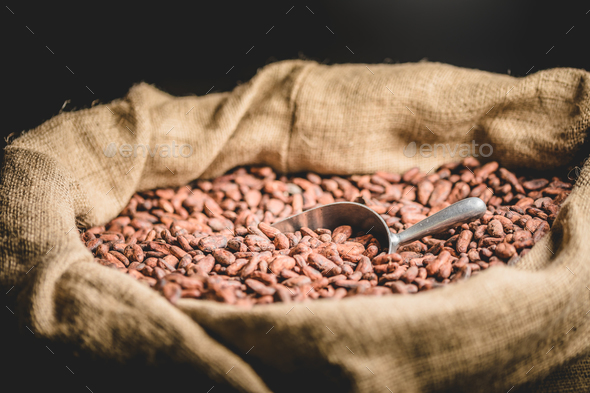 Canvas bag with Imported roasted cacao beans - Stock Photo - Images
