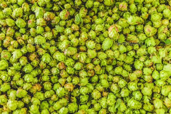 Green hop texture - Stock Photo - Images
