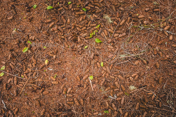 Dry ground in spruce - Stock Photo - Images
