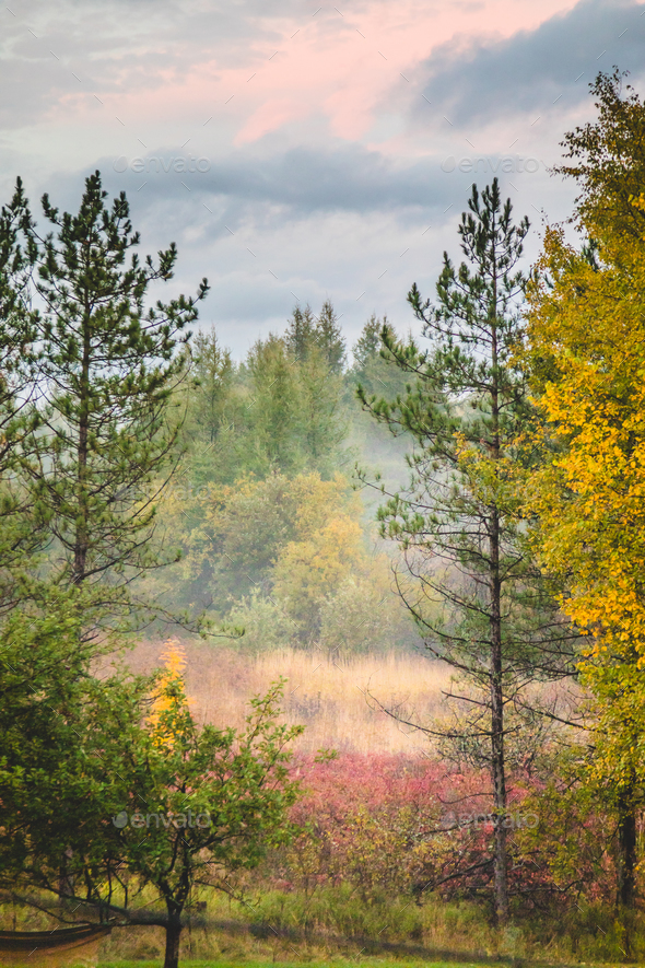 Beautiful autumn forest - Stock Photo - Images