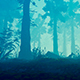 Panorama Of The Foggy Forest - VideoHive Item for Sale