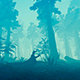 Movement Through The Mysterious Forest - VideoHive Item for Sale