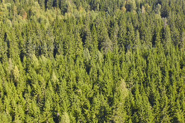 Finland green pine forest landscape. Finnish timber industry. Horizontal - Stock Photo - Images