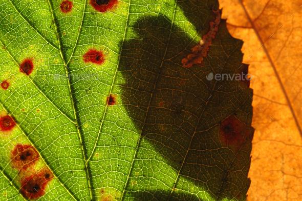 bramble and oak - Stock Photo - Images