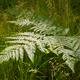 ferns in sunlight - PhotoDune Item for Sale