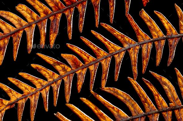 golden ferns - Stock Photo - Images