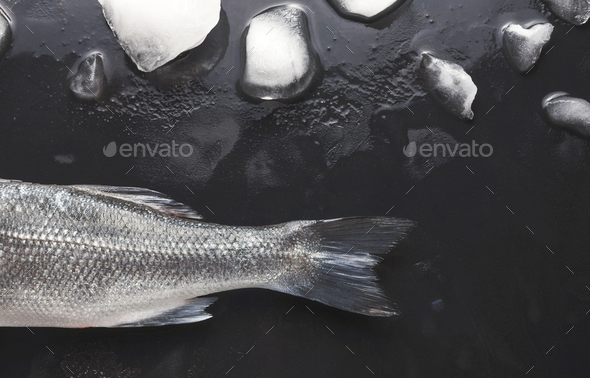 Fresh sea bass on black background - Stock Photo - Images