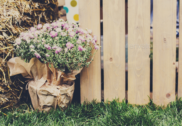 Gardening, wood fence in green spring garden - Stock Photo - Images