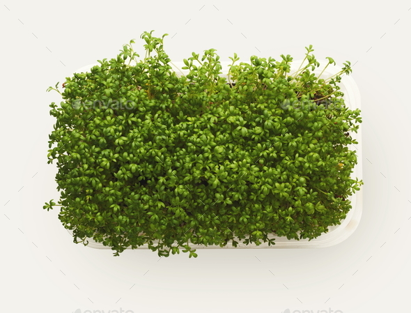 Micro greens growing in plastic bowl top view, isolated - Stock Photo - Images