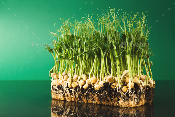 Organic growing micro greens - Stock Photo - Images