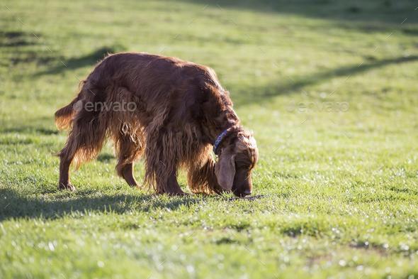 Dog smelling - Stock Photo - Images