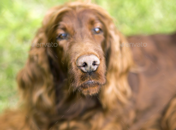 Funny dog's nose - Stock Photo - Images