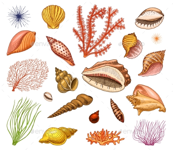 Seashells Set or Mollusca Different Forms - Animals Characters
