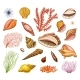 Seashells Set or Mollusca Different Forms - GraphicRiver Item for Sale