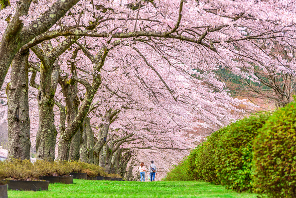 Shizuoka, Japan in Spring - Stock Photo - Images