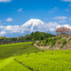 Tea Plantation and Mt. Fuji - PhotoDune Item for Sale