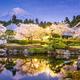 Mt. Fuji in Spring - PhotoDune Item for Sale