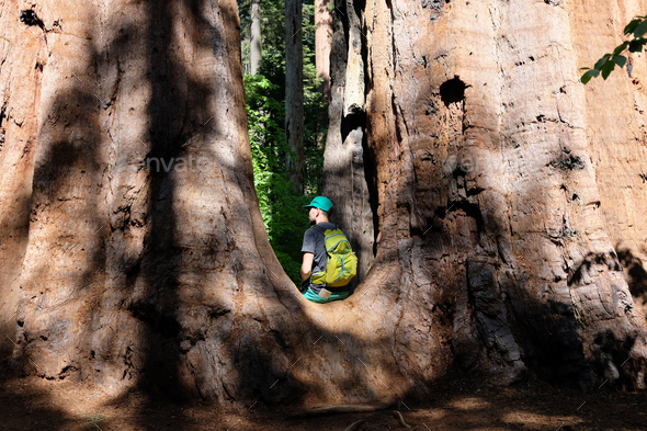 Tourist with backpack hiking among sequoia redwoods - Stock Photo - Images