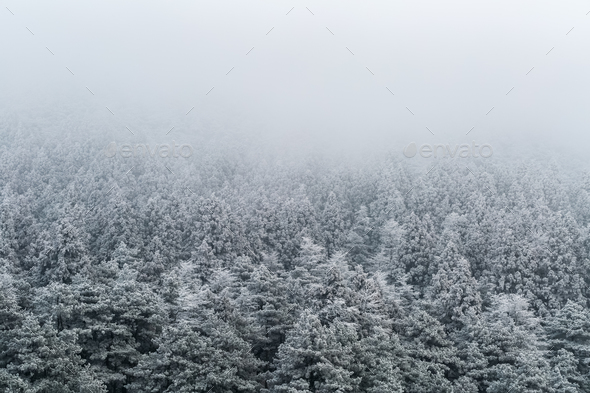 winter forest background - Stock Photo - Images