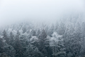winter forest in fog - PhotoDune Item for Sale