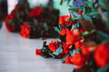 fresh cut red roses lie on the table - PhotoDune Item for Sale